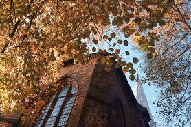 Das gelbe Laub der Linden umspielt St. Aegidien - Copyright: Christine Rudolf