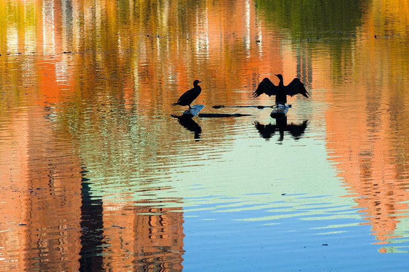 Herbststimmung: Die Türme des Doms spiegeln sich im Mühlenteich. Zwei Enten sind auf einem schwimmenden kleinen Steg in der Mitte des Mühlenteichs zu sehen.